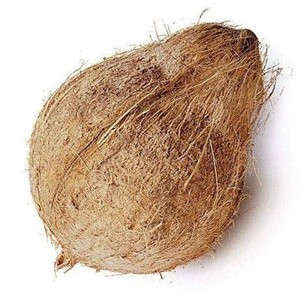 Coconut-Medium